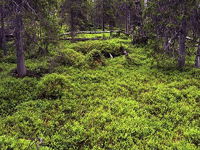 kvikkjokk single men An autumn trek in arctic sweden: the kungsleden trail from saltoloukta to kvikkjokk.
